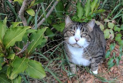 Cats: Booger 3