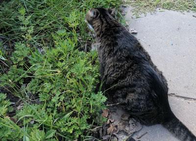 Cats: Booger 2