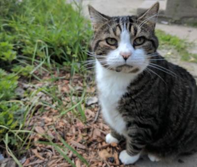 Cat: Booger